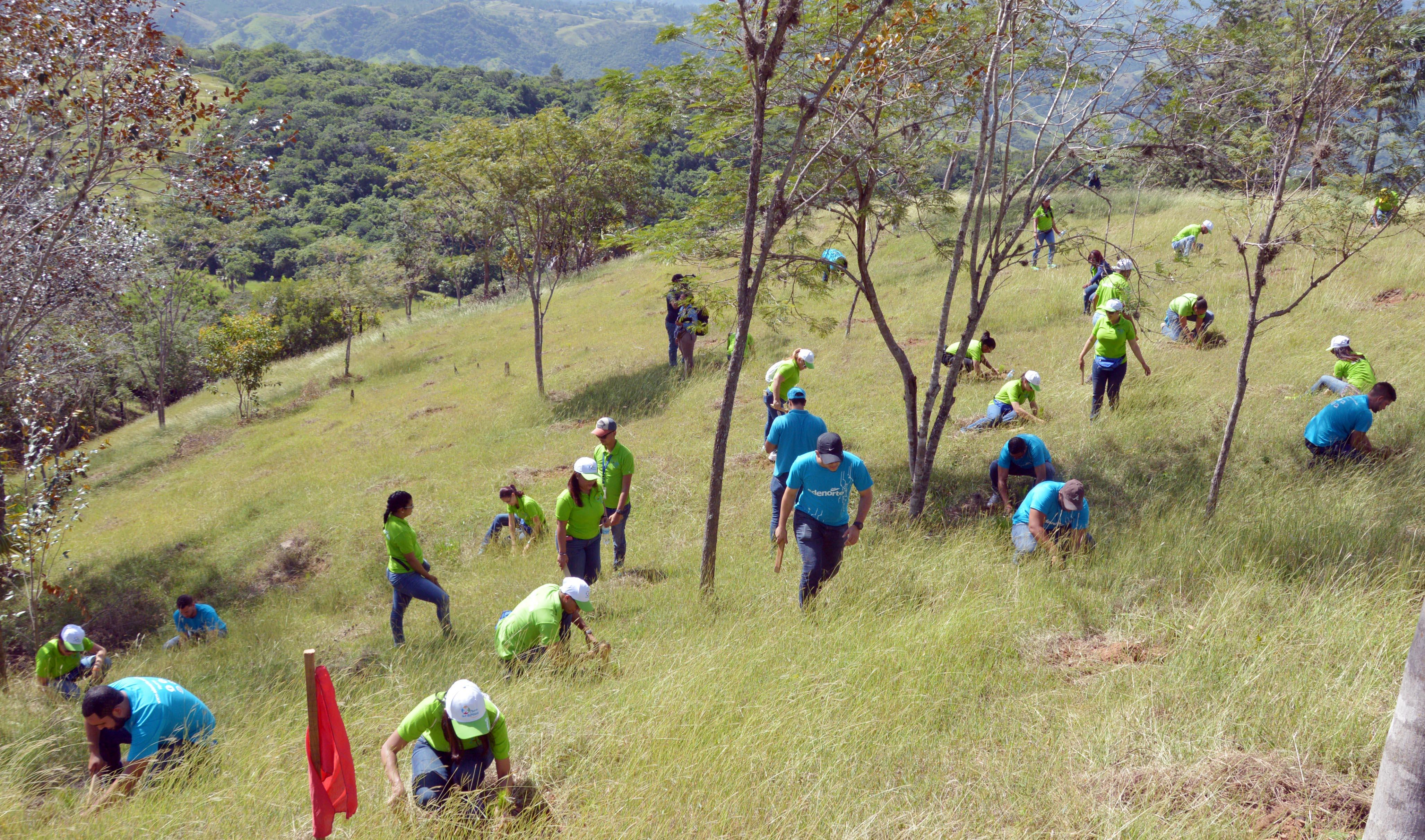 Voluntarios de EDENORTE Dominicana en la jornada de reforestación llevada a cabo en área del Plan Sierra.
